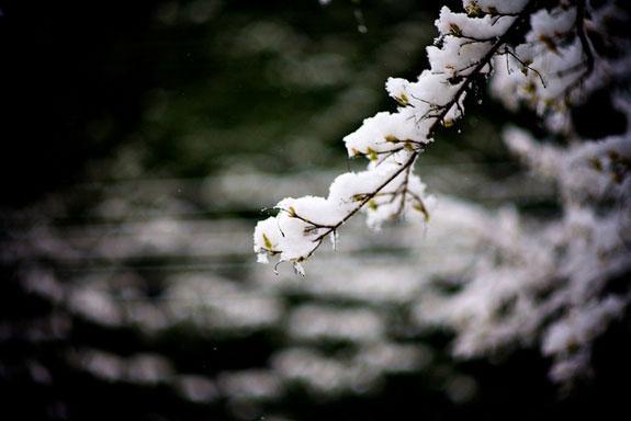 Portland Snow Day